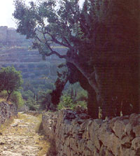 A slope of the Mount of Olives.